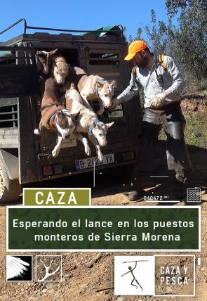 Esperando el lance en los puestos monteros de Sierra Morena