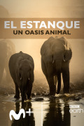 El estanque: un oasis animal | 1temporada