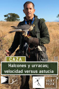 Halcones y urracas, velocidad versus astucia