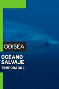Océano salvaje | 1temporada