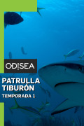 Patrulla tiburón | 1temporada