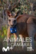 Animales con cámaras | 1temporada